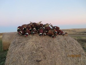Another successful day in South Dakota for John Mooney and L'Escarbot Kennels.