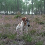 Etoc at Fall Shoot to Retrieve Trial in Escourse, France.  Etoc makes a flawless retrieve.