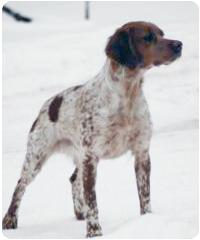 Training The Versatile Hunting Dog Pdf