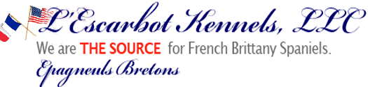 L'Escarbot Kennels | French Brittany Spaniel puppies, training, breeding & stud service