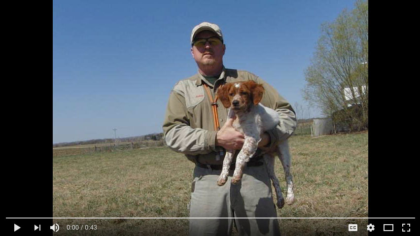 L'Escarbot Kennels LLC| French Brittany Spaniel puppies